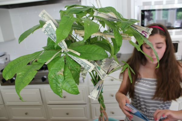 The Money Tree 5 The OP Life