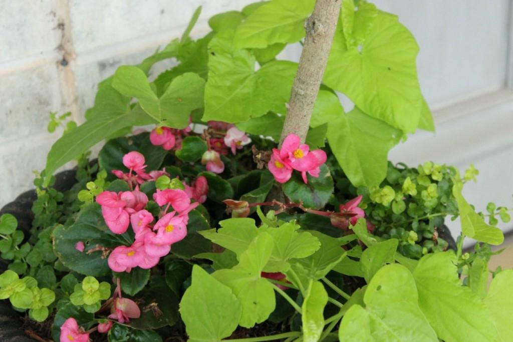 Adorn Container Gardens