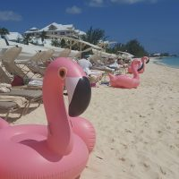 Be A Flamingo In A Flock Of Pigeons TheOPLife