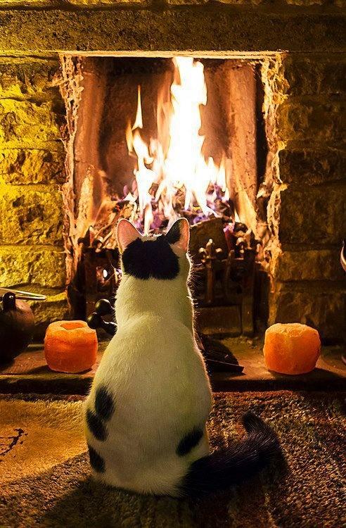 cat by cozy fire
