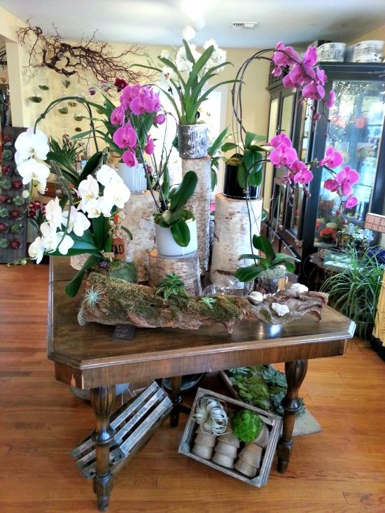 Orchids The Fleuriste